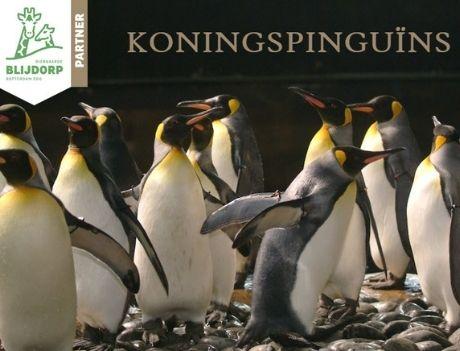 Wij hebben 25 Koningspinguïns geadopteerd!